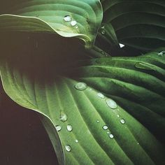 Tumblr #leaf #plant #raindrops