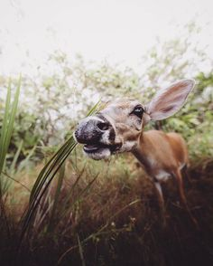 Animal Rights Photography: Sammantha Fisher Captures Amazing Animal Portraits