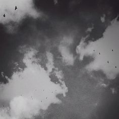 B3PO | Untitled #b3po #blackwhite #instagram #birds #photography #nature #landscapes