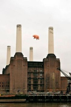 FFFFOUND! | Pink Floyd (10) #fotography #pink #pig #animals #floyd