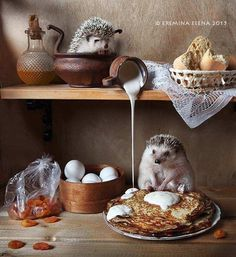 Elena Eremina Captures The Secret Life Of Hamsters