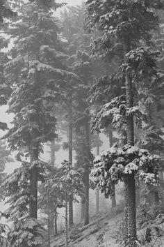 Fotostrecke 2012/02 » Fotografie » Ausstellung » Forum » Supertopic #photography #snow #nature #tree