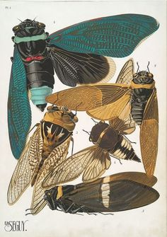 weetstraw.com - Insect Collages #insects