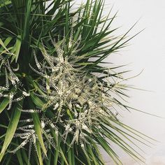 Statigram – Instagram webviewer #house #plant #green