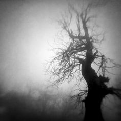 Guard Of The Dream Forest, photography by Vangelis Bagiatis #lensbaby
