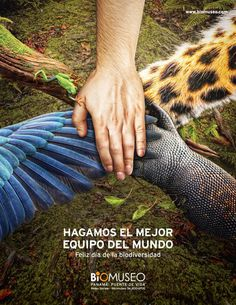Biomuseo – Biodiversity Day