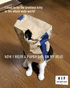 Ideas #ads #even #once #ideas #not #cats #nip