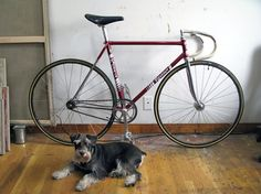Early 80's Rossin Pista - Pedal Room #rossin #track #dog