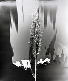 Klea McKenna, Grassland Photograms #photography