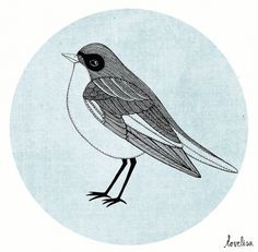 Tovelisa: Illustration #illustration #bird