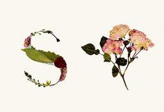 Herbario. Tipografía experimental : Haizea Nájera : Portfolios : Domestika #collage #experimental #typography