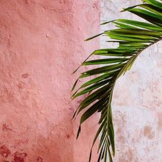 #pink #plant #art #photography