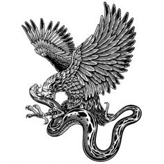 b&w_31.jpg (800×800) #illustration #eagle #snake #badass