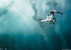 Underwater Photography by Alexander Safonov #inspiration #photography #underwater