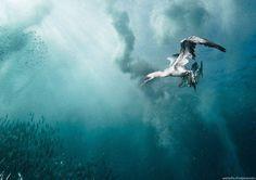 Underwater Photography by Alexander Safonov #inspiration #photography #underwater