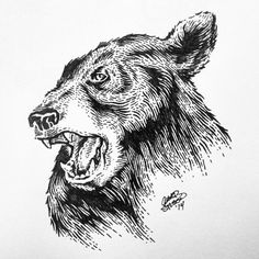Black_bear_done #illustration