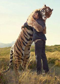 Source: aurvm, via stephenbeadles #tiger #photography #cat