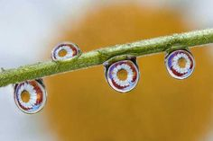 Water Drops by Dave Wood