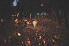 furrylittlepeach #forest
