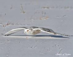 #your_best_birds: Fantastic Birds Photography by Robert S. Parker