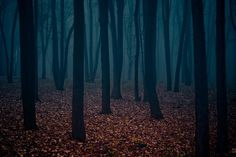 mysterious_forest.jpg (1000×669) #photography