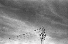 Birds | Triangular Love.