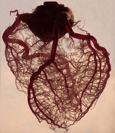 The Meta Picture #heart #veins