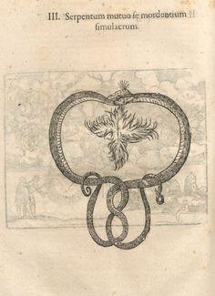 000730 #naturalism #aldrovandi #illustration #latin #ulisse #monster #drawing