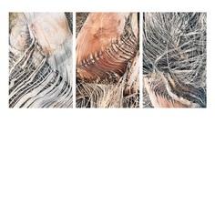 #texture #palmtree PHOTOGRAPHIE © [ catrin mackowski ]