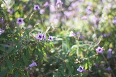 Mini Flowers, Ella Clark, taken 1st September 2017, http://suitcasedreaming.tumblr.com