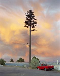 Sasha Bezzubov   PICDIT #photo #photography #tree #landscape
