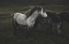 all the ponies love #horses #wild #wilderness #free #landscape #pony #love