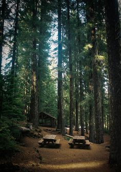 Technosoul #forest #camping