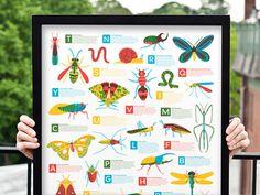 Bugs Alphabet #colour