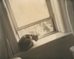 Anna Marcell #inspiration #photography #polaroid
