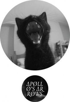 Aaron Dawkins #aaron #cat #shape #dawkins #circle