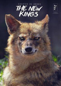 #jackal #wild #forest # wildlife #photography #animal #eyes #gaze