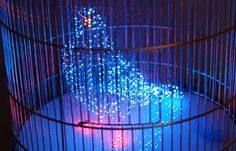 MAKOTO TOJIKI | LUST NATION #lust #nation #design #in #bird #cage #art #artist