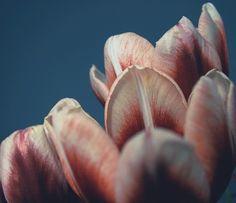 Lyla & Blu #pink #image #photography #blue #flowers