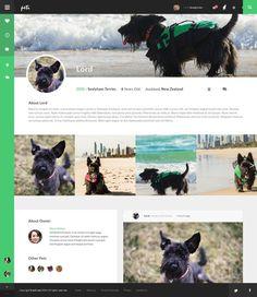 social network, pets, UI, web