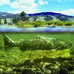 Giant Fish? #giant #fish