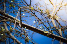 Spring #nature #season #tree