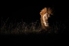 Awesome Close-Up Portraits of Wild Animals by Rudi Hulshof