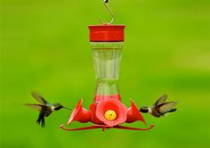 This hummingbird feeder is easy to use, strong, and will get those elusive hummingbirds flapping around your yard. #modern #lifestyle #design #product #industrial