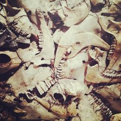 supercamera #teeth #jaw #skull #bones