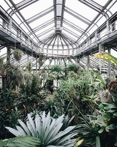 #berlin #vintage #green #plants #nature #botanic #botanicgarden #garden #architecture #light #white #photography