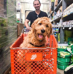 Most Dog Friendly Stores in America - Home Depot