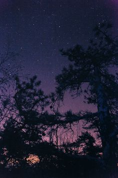 Photographs | Ryan McGinley #mcginley #ryan #2011 #sky #knotty #photography #stars #pine #trees