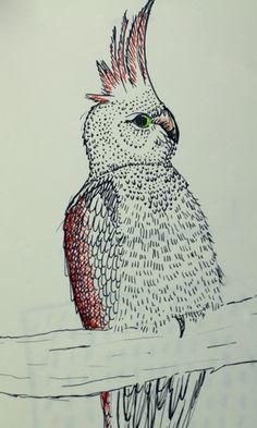 Perroquet #illustration #design #graphic