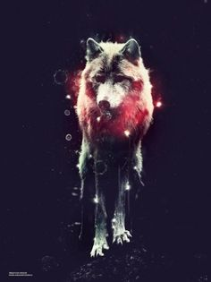 Andaur Studios / Everyday #andaur #passion #sebastian #cold #illustration #wolf #animal